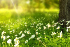 spring-276014_1280-900x300