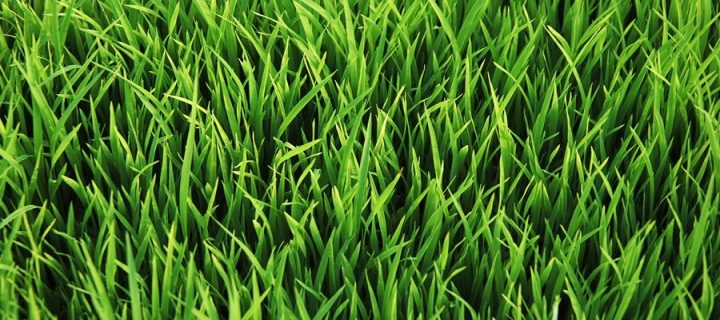 Buying a Synthetic Cricket Pitch