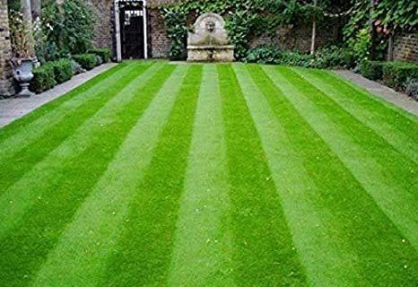 Step by Step Lawn Care Tips