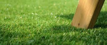 Benefits of Purchasing Artificial Grass